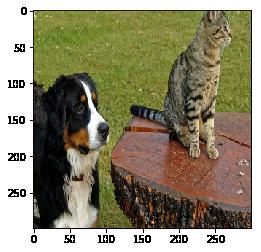 개와 고양이 사진