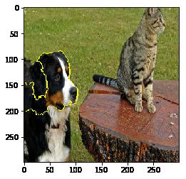 사진에서 노란색 선으로 표시된 영역이 개로 예측하는 데 가장 중요했던 부분입니다.