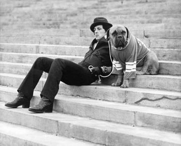 Stallene com seu cão